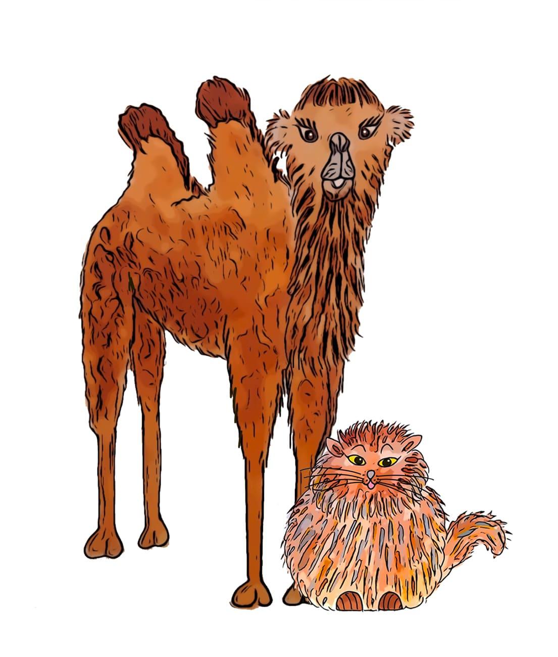 Dessin d'un chat et d'un chameau du livre pour enfants et jeunesse Des Chameaux et de poux