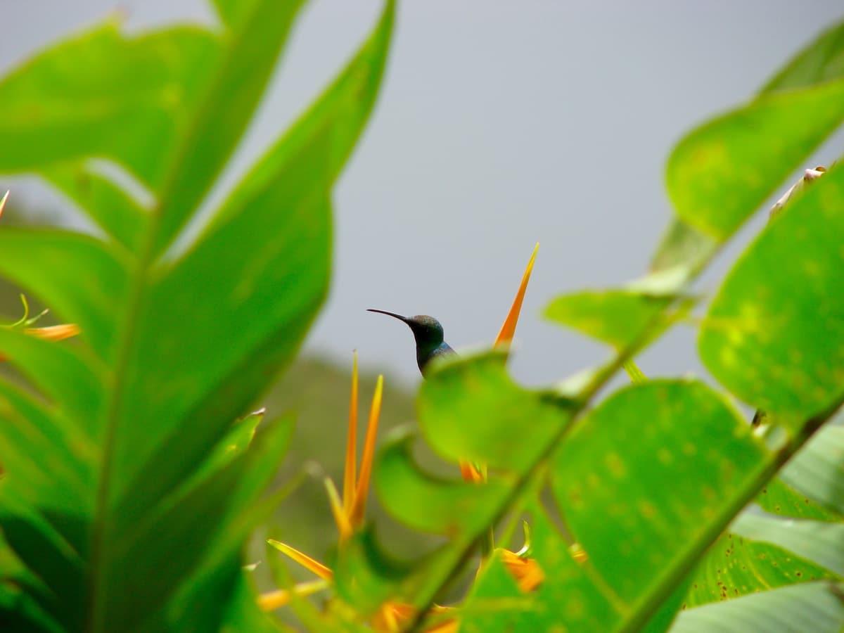 Photo d'un oiseau lors d'un voyage au Guatemala pour le livre Chasseurs de pierres au Guatemala