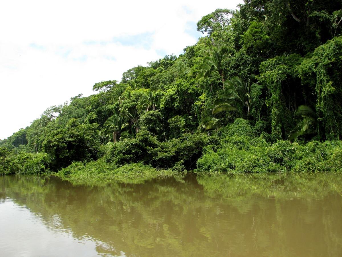 Photo de la forêt lors d'un voyage au Guatemala pour le livre Chasseurs de pierres au Guatemala
