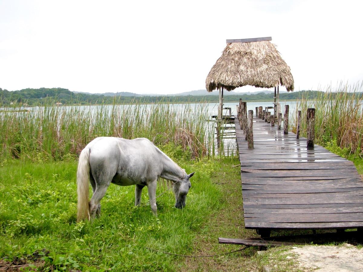 Photo d'un cheval lors d'un voyage au Guatemala pour le livre Chasseurs de pierres au Guatemala