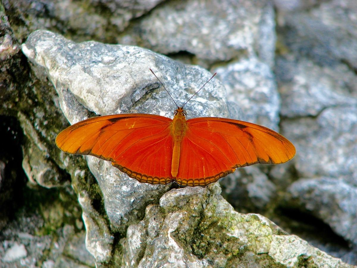 Photo d'un papillon lors d'un voyage au Guatemala pour le livre Chasseurs de pierres au Guatemala