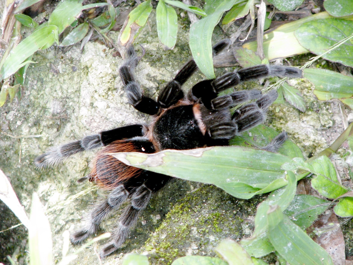 Photo d'une araignée lors d'un voyage au Guatemala pour le livre Chasseurs de pierres au Guatemala