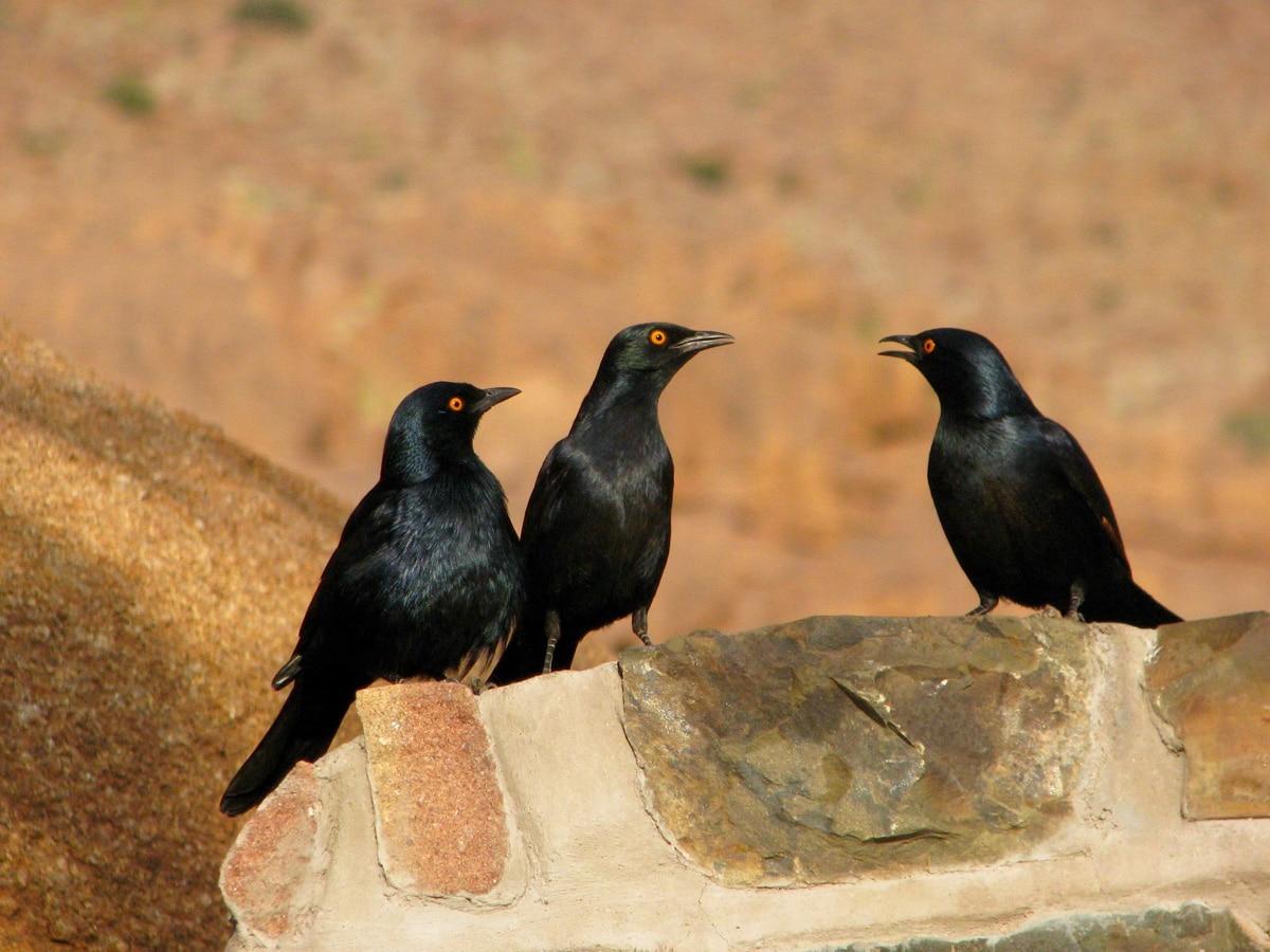 Photo d'oiseaux lors d'un voyage au Namibie pour le livre Chasseurs de pierres en Namibie