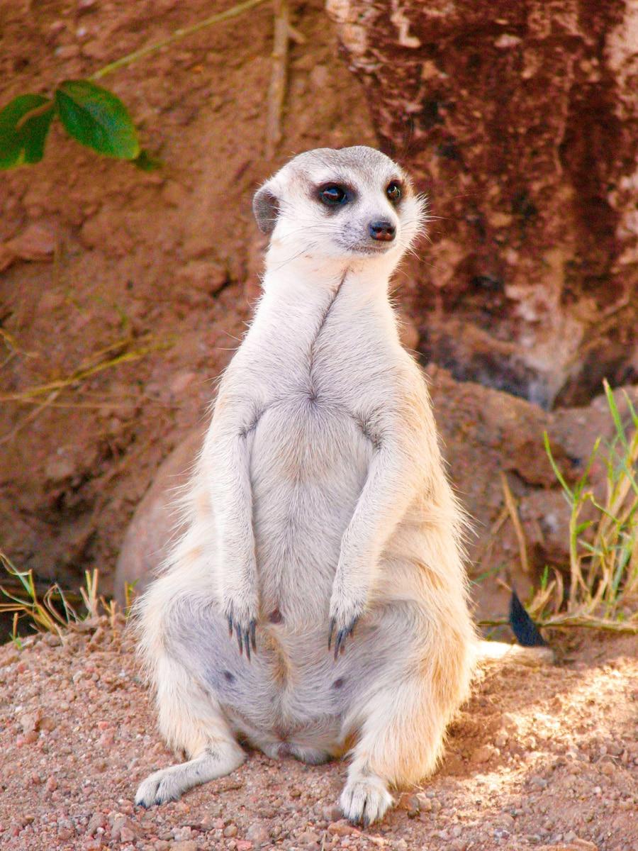 Photo d'un animal lors d'un voyage au Namibie pour le livre Chasseurs de pierres en Namibie