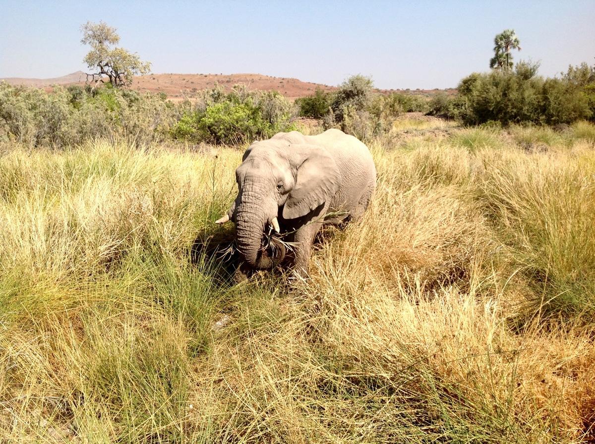 Photo d'un éléphant lors d'un voyage au Namibie pour le livre Chasseurs de pierres en Namibie