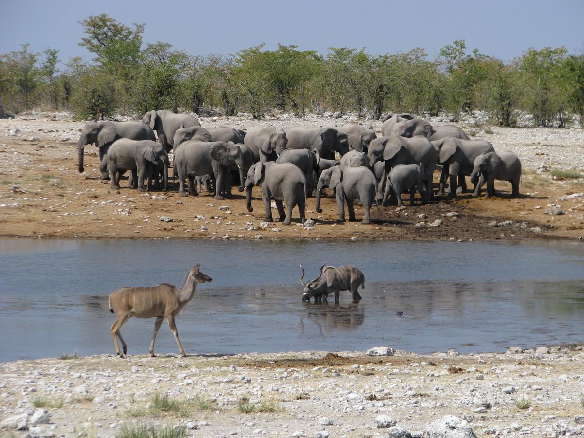 Photo d'un troupeau d'éléphant et de deux autres animaux lors d'un voyage au Namibie pour le livre Chasseurs de pierres en Namibie