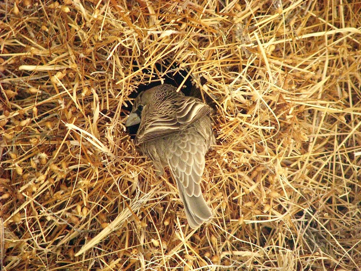 Photo d'un oiseau lors d'un voyage au Namibie pour le livre Chasseurs de pierres en Namibie