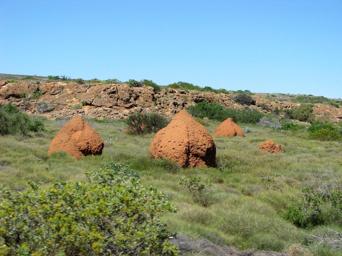 Photo d'une termitière lors d'un voyage en Australie pour le livre Chasseurs de pierres en Australie