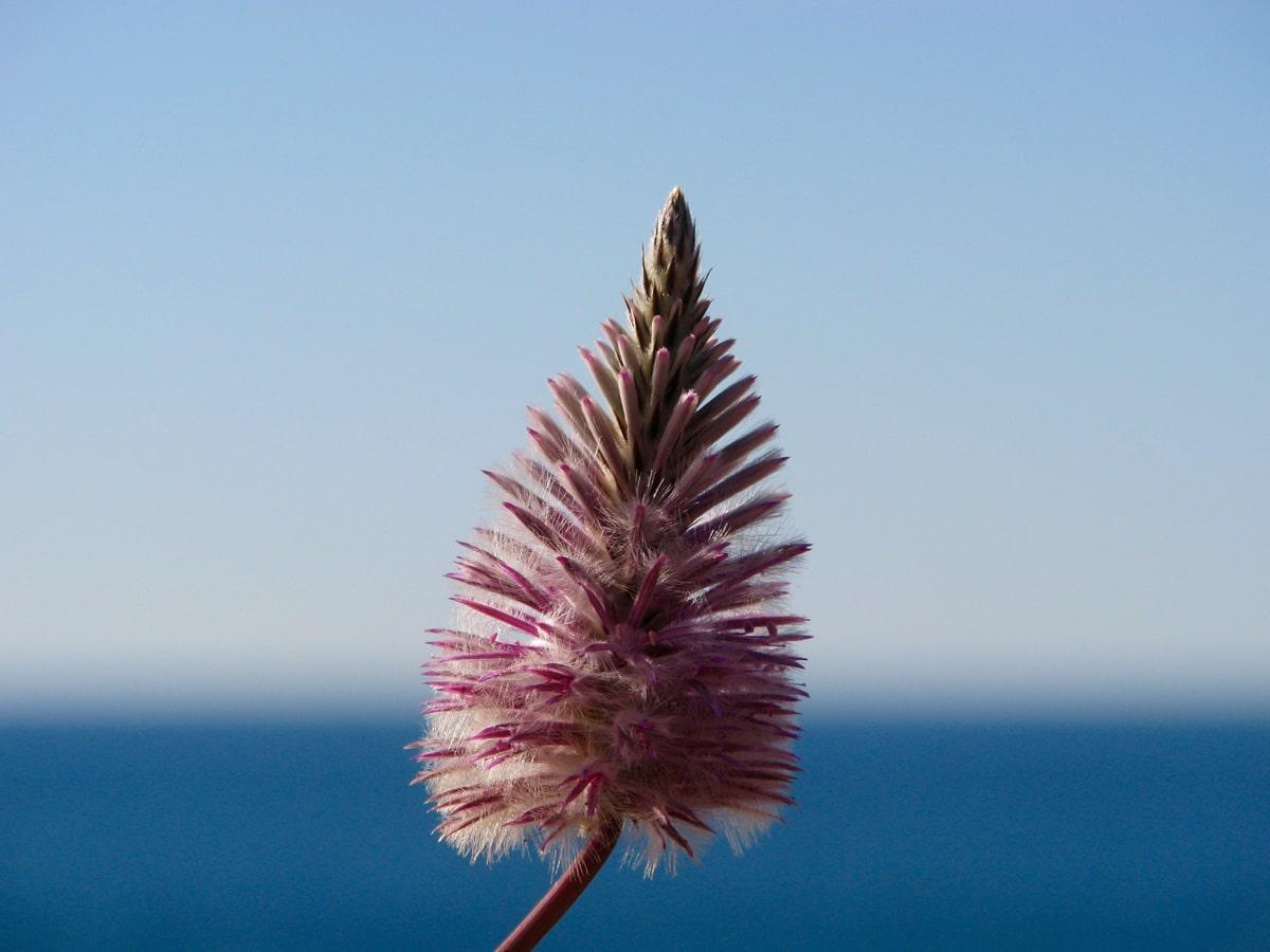 Photo d'une fleur lors d'un voyage en Australie pour le livre Chasseurs de pierres en Australie