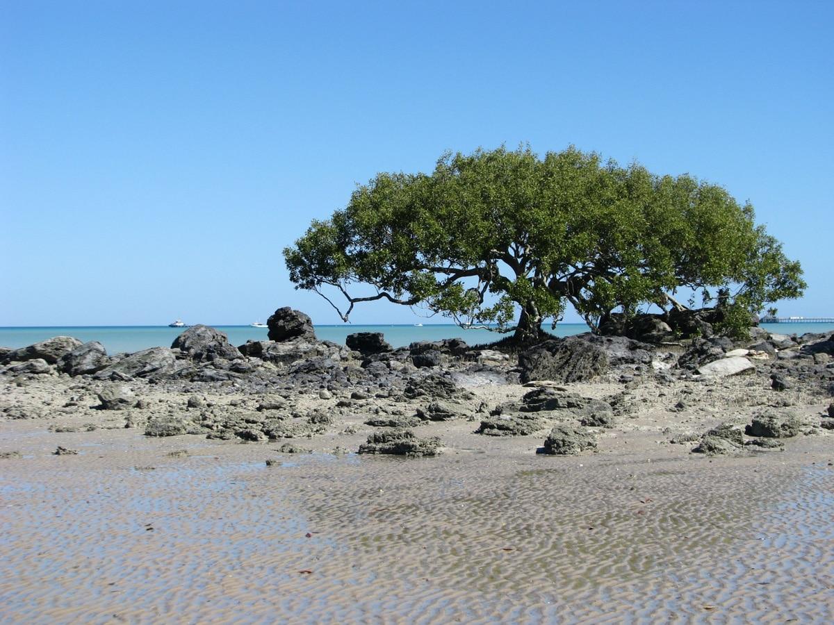 Photo d'un arbre lors d'un voyage en Australie pour le livre Chasseurs de pierres en Australie