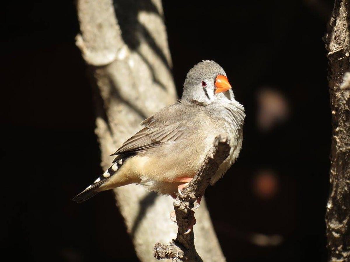Photo d'un oiseau lors d'un voyage en Australie pour le livre Chasseurs de pierres en Australie