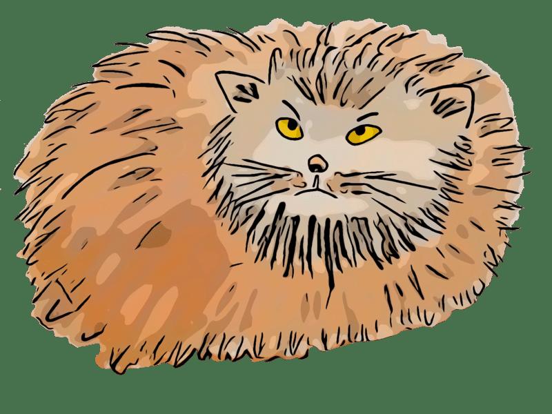 Dessin du chat Manuul du livre pour enfants et jeunesse Des chameaux et des poux